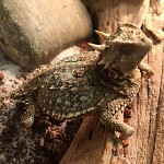 Lasers to imitate lizards! How reptiles and bugs are boosting innovation (euronews.com)