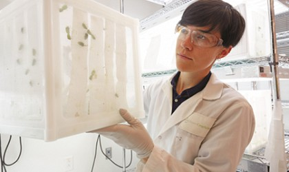 Bayer and IMBB-FORTH in Greece collaborate to support discovery of novel insect control solutions
